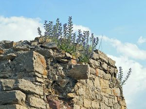 flower-on-an-ancient-wall-1390005_640